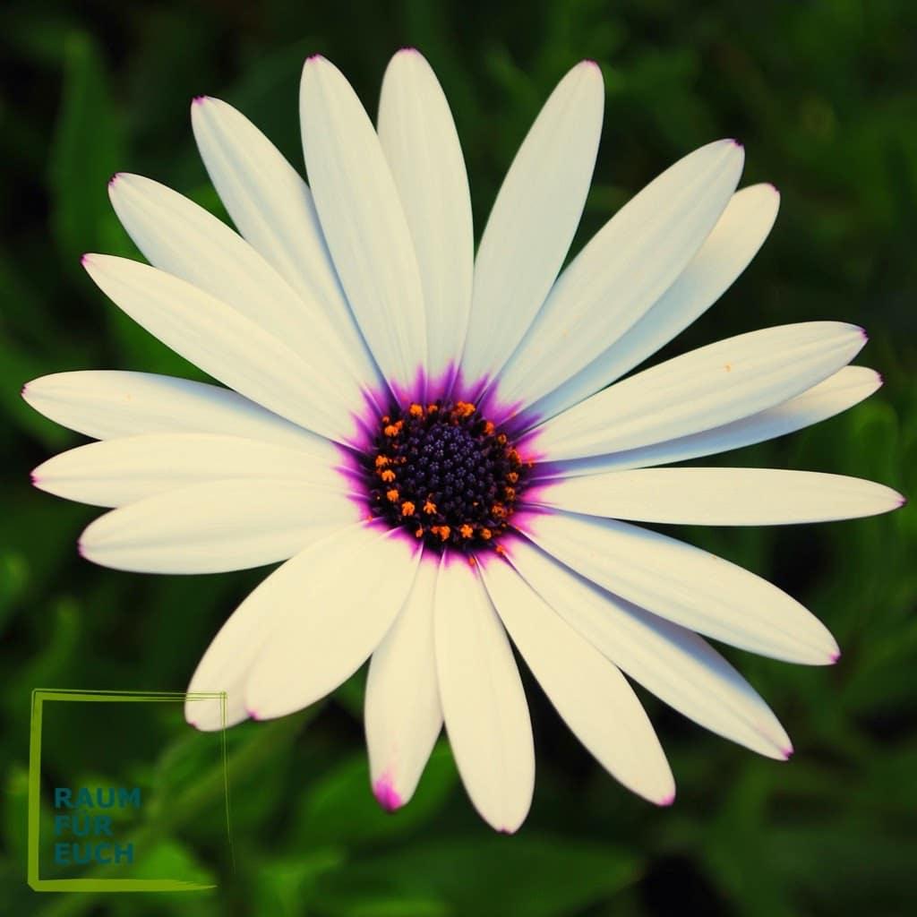 Blume - Liebe heißt erblühen