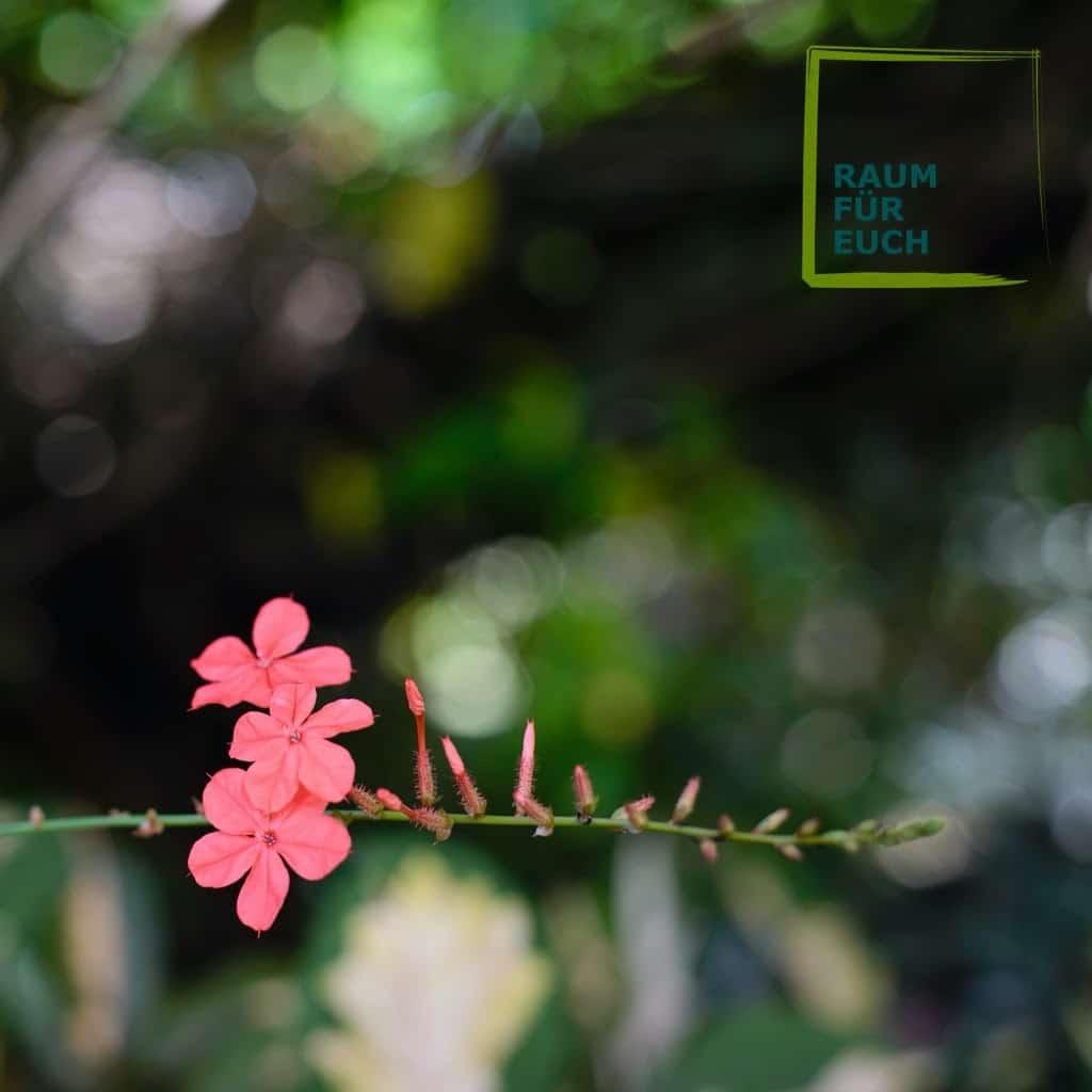 Blumenrispe - Liebe heißt den Augenblick zu genießen