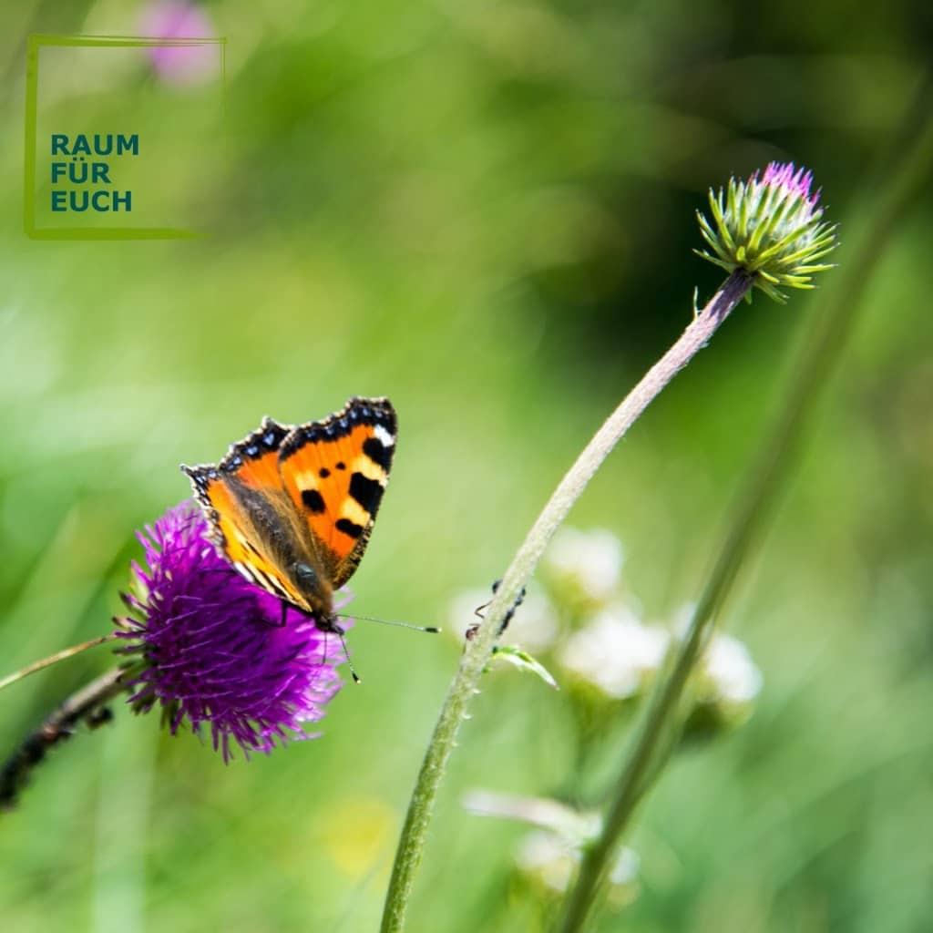 Schmetterling - Liebe heißt sich aufeinander einlassen