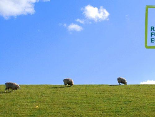 Ordnung Schafe